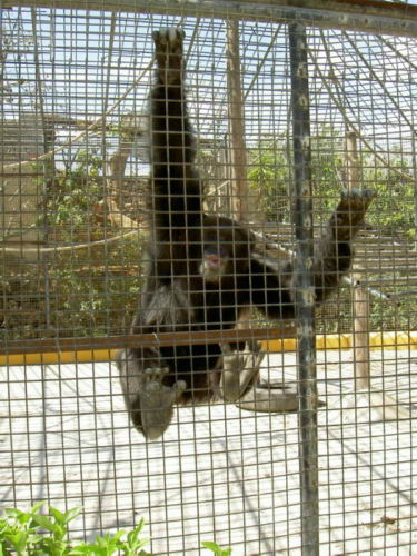 Tierpark Teneriffa Monkey Park