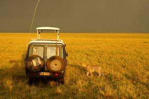 Abenteuerliche Safari in der Wildnis